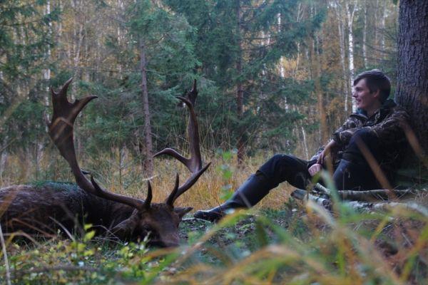 Damhirsch und Jäger