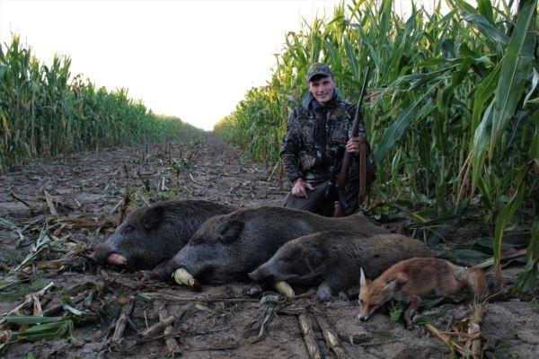 Paul mit 3 Sauen und einem Fuchs