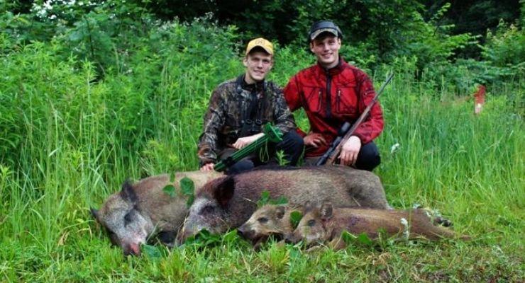 Sauen aus dem Weizen mit Gerold und Paul